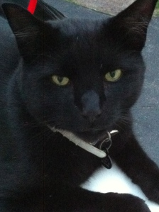 """Lucky """"returned from the dead"""" after four months due to his ID tag"""